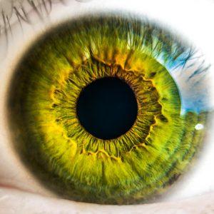 retinografía en retina